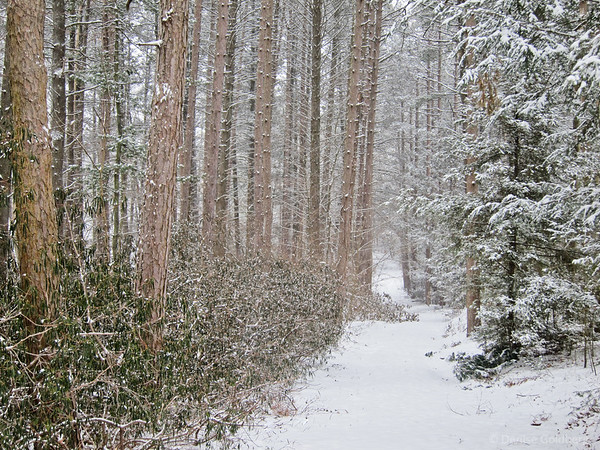 snow falling, a tree-lined trail
