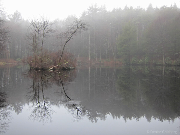 tree & reflections, in fog