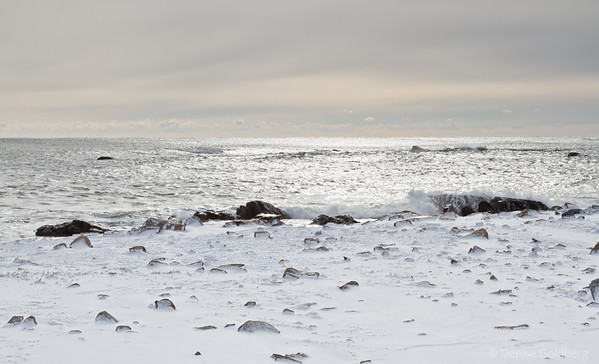 snow and crashing waves, Odiorne Point State Park, Rye, NH