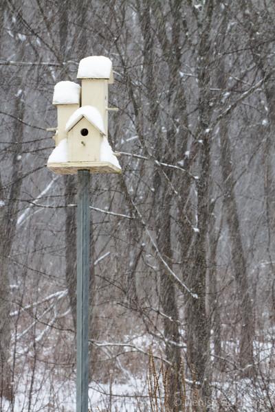 birdhouse in snow