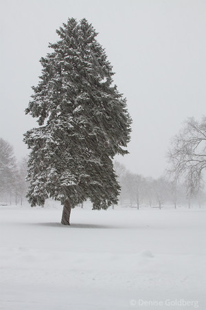 tree standing tall in the midst of a snow storm