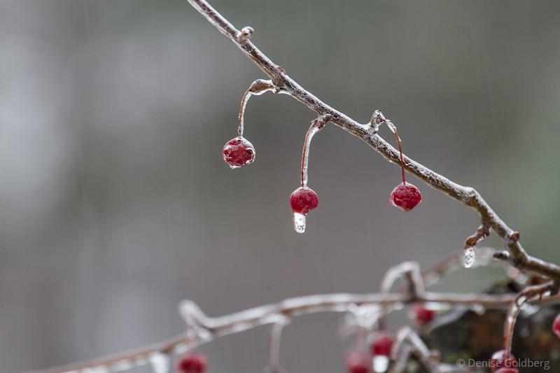 freezing rain creates icy world