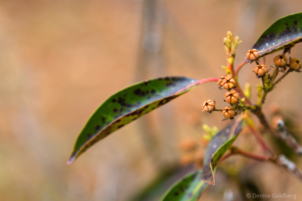 end of season flowers change to buds or berries of a sort