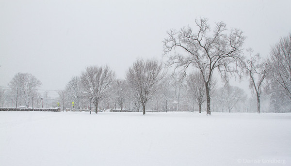 trees standing, snow falling