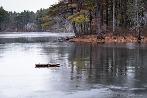 resting on ice