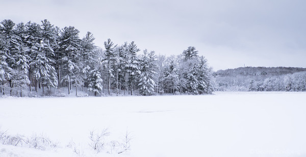 snow-covered trees behind and ice and snow-covered pond