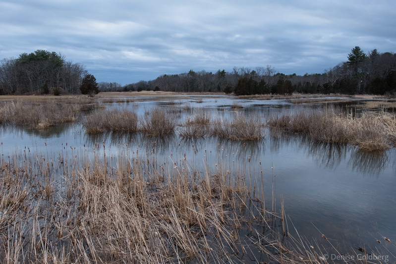 a flooded saltmarsh along Route 1, Newbury, MA