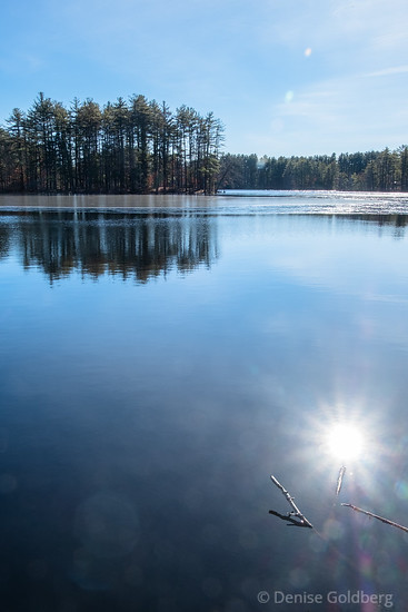 sun star in Field Pond, Harold Parker State Forest