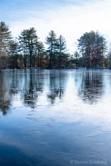 trees, a pond, and an icy reflection