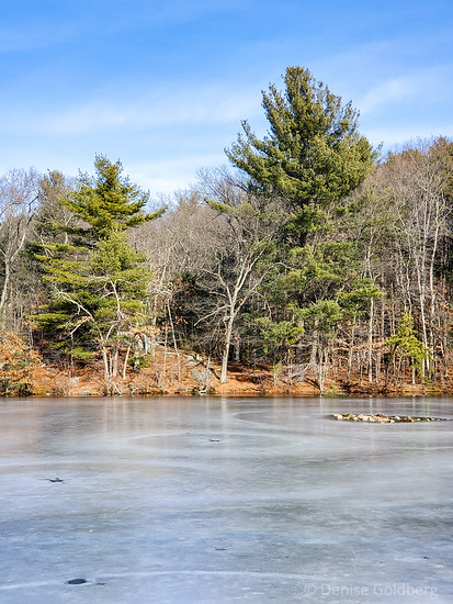 trees & an icy pond
