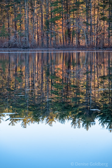 reflected light at Harold Parker State Forest