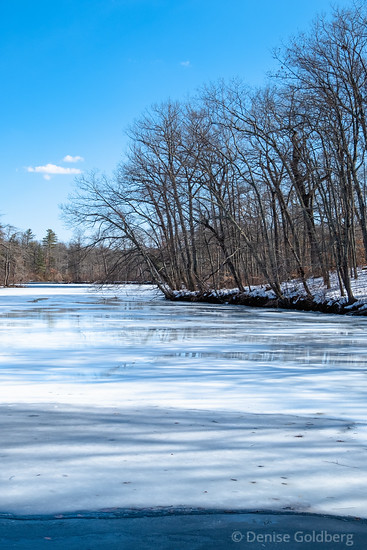 river view, trees & ice
