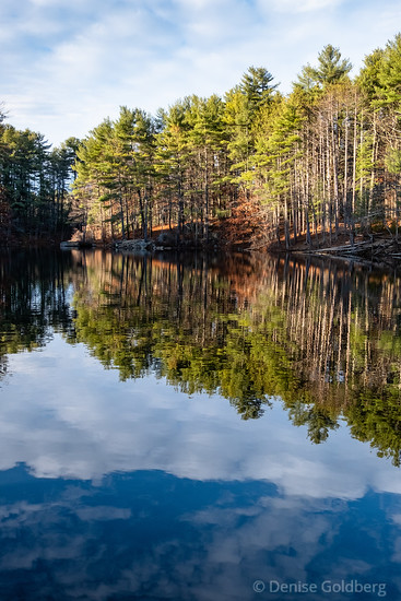 evergreens reflecting, Harold Parker State Forest