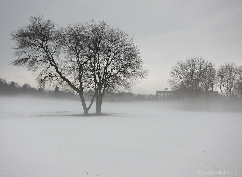 Winter's bare branches with the added magic of ground fog