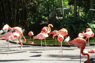 Flamingo Gardens, Florida