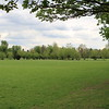 The playing fields of Eton.