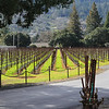 Neat rows of future vines