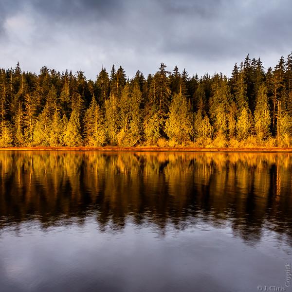 Pines, Ozette Lake, Olympic National Park, Washington