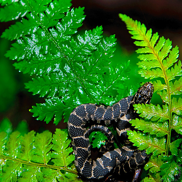 Water Snake, Zurich Bog, New York