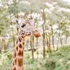 Safari-Africans-077