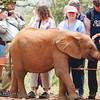 Safari-Africans-164