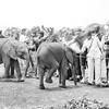Safari-Africans-166