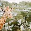 Safari-Africans-161