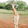 Safari-Africans-133
