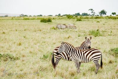 Safari-2ofaKind-028