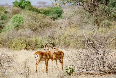 Safari-2ofaKind-020