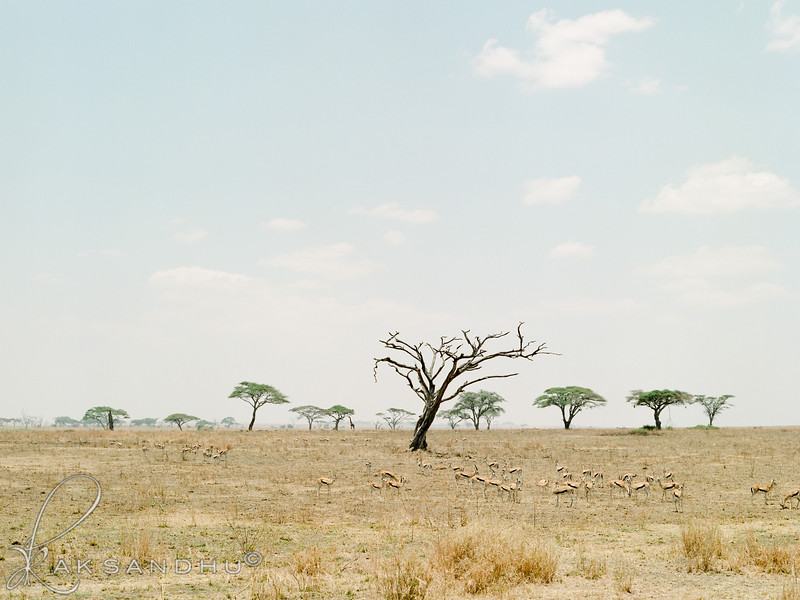 Safari-020.jpg