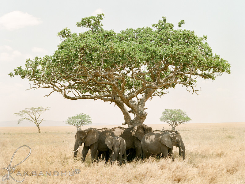 Safari-015.jpg
