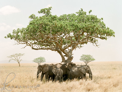 Safari-015