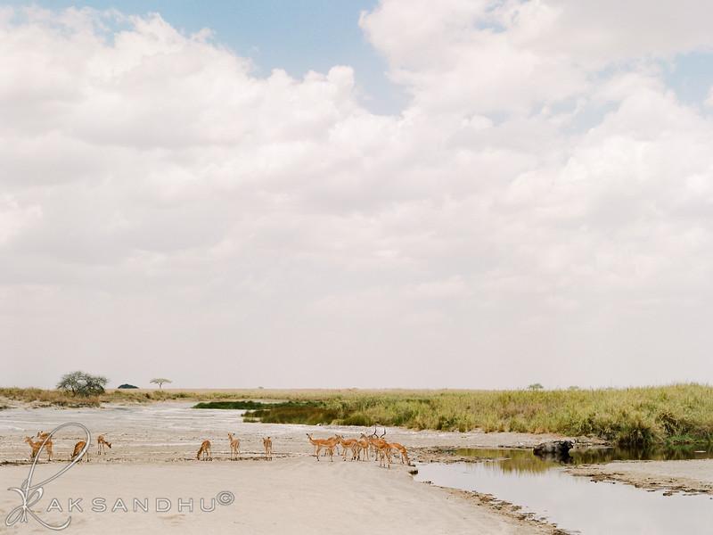Safari-007.jpg