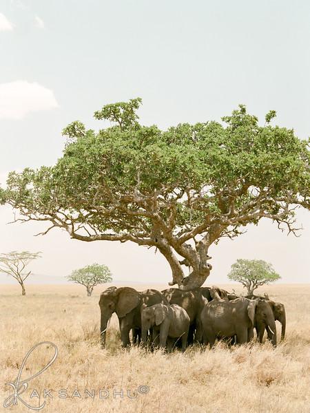 Safari-017