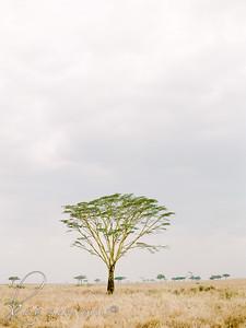 Safari-026