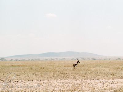 Safari-024