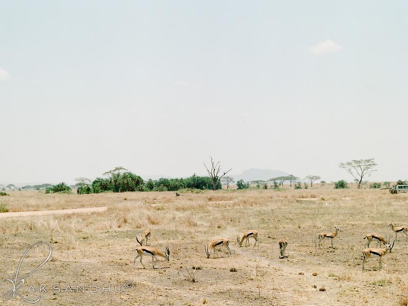 Safari-018