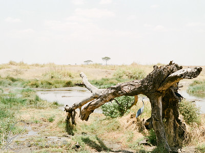 Safari-022