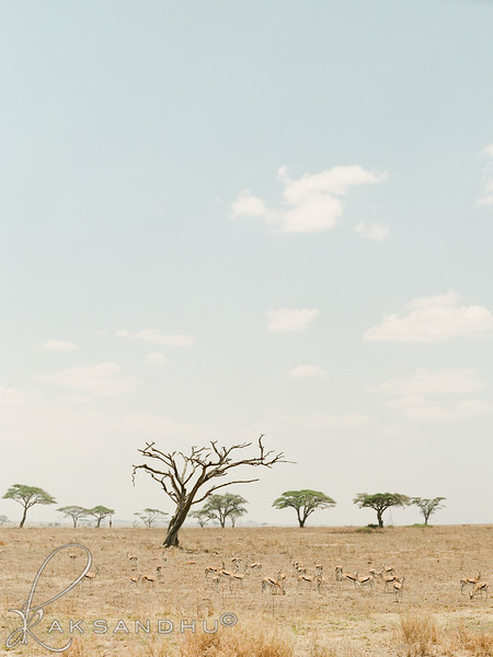 Safari-021.jpg