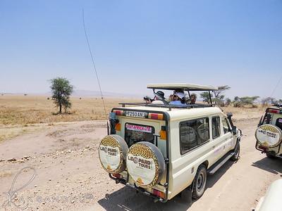 SafariTroop-008