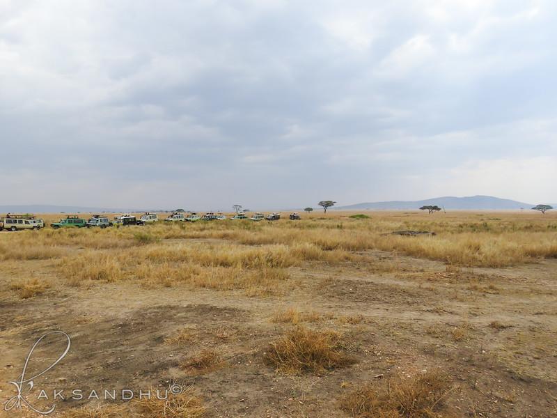 SafariTroop-307