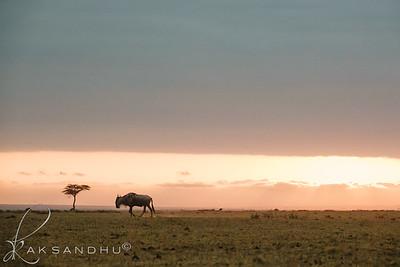SunInAfrica-014