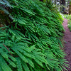 Ferns!!