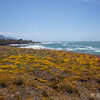 Wildflowers at Seal Rock Overlook