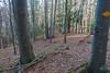 Die Schlucht liegt hinter uns und wir steigen durch den Wald weiter hinauf.