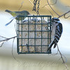 Sharing The Suet