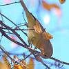 Autumn Colors & Autumn Warblers