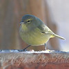 Warblers First Visit To The Birdseed View 2