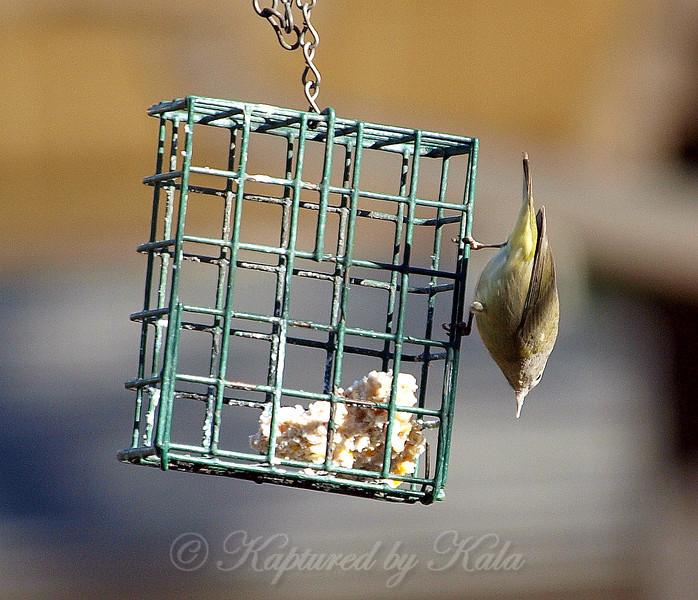 Avian Plumb Bob